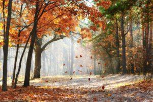 Ayurvedamagazin-Ayurveda-im-Herbst_Herbst-im-Wald