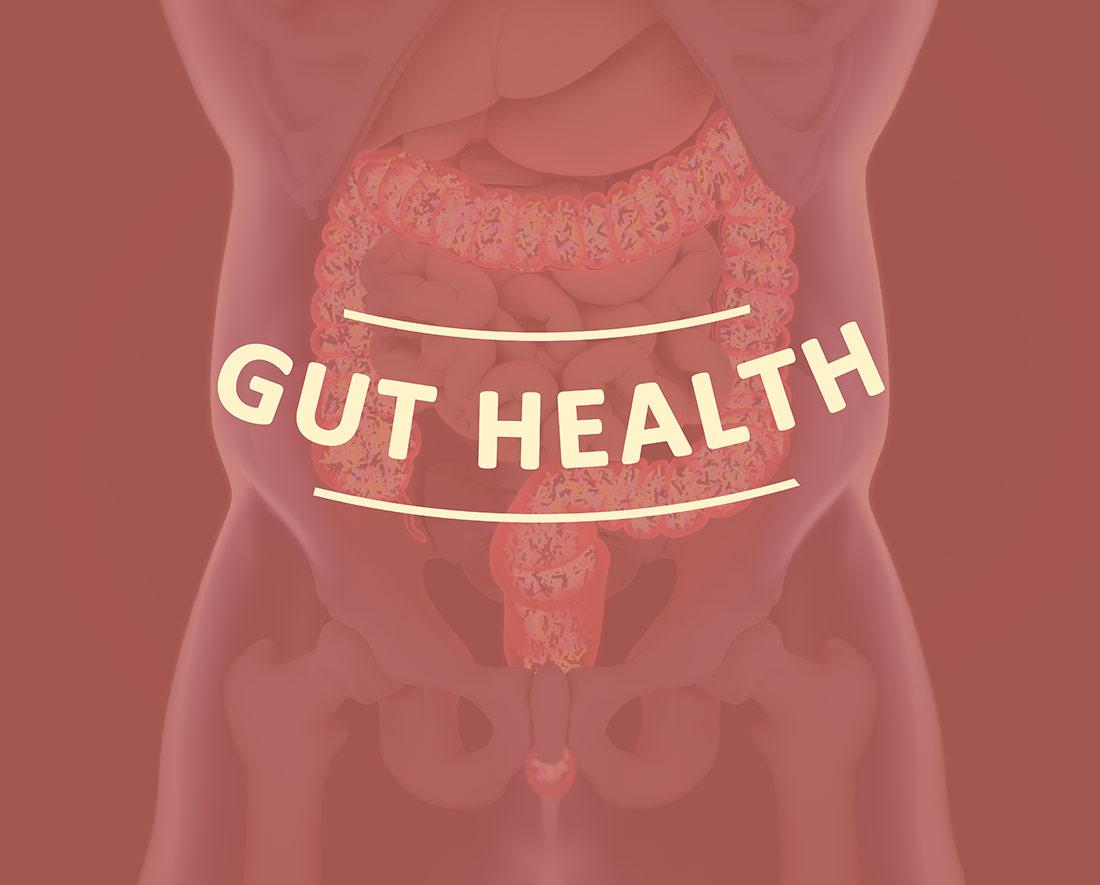 Ayurvedamagazin-Darm_Schaubild-Darm-Gut-Health