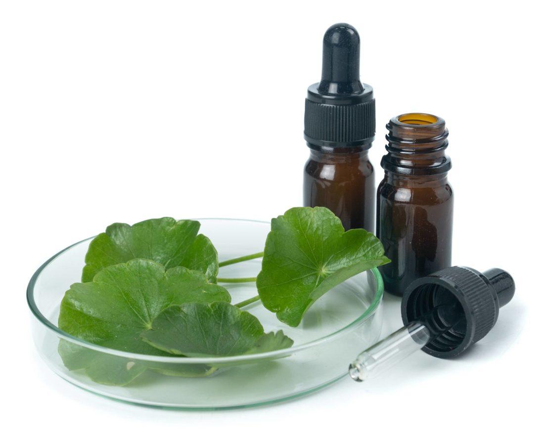 Ayurvedamagazin-Therapieoel_centella-asiatika-Pflanze-zum-Therapioel